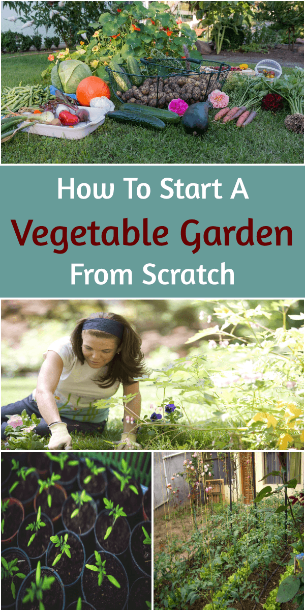 How to start Vegetable Garden from Scratch