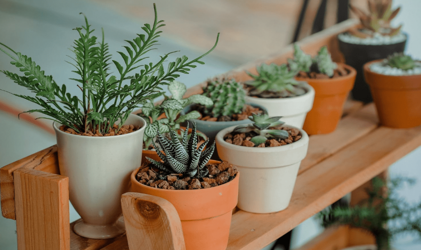 13 Best Indoor Plants For Your Home That are Easy to Care