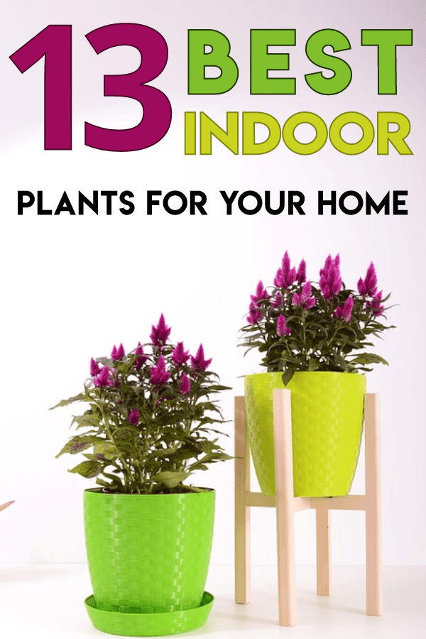 Best indoor plant ideas