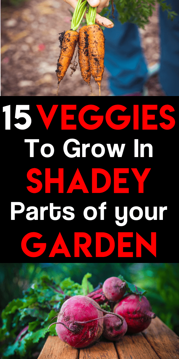 Shade vegetables